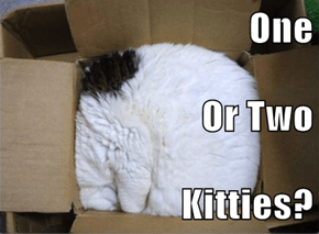 One  Or Two Kitties?