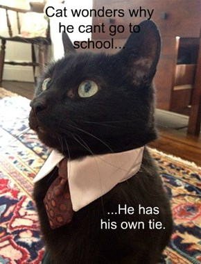 Cat wonders why he cant go to school...