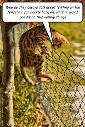 "Why do they always talk about ""sitting on the fence""? I can barely hang on, ain't no way I can sit on this wobbly thing!!"