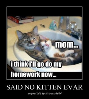 SAID NO KITTEN EVAR