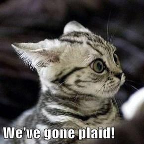 We've gone plaid!