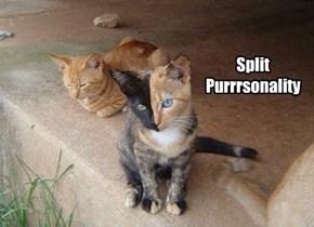 Split Purrrsonality