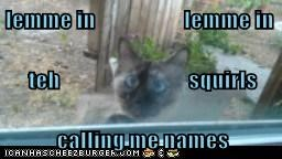 lemme in                    lemme in teh                             squirls calling me names