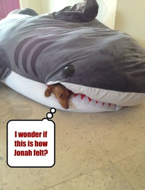 I wonder if this is how Jonah felt?
