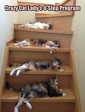 Crazy Cat Lady's 4-Step Program