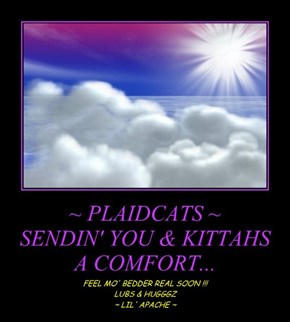 ~ PLAIDCATS ~ SENDIN' YOU & KITTAHS A COMFORT...