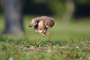 I Just Want to Fly!