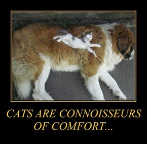 CATS ARE CONNOISSEURS OF COMFORT...