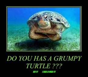 DO YOU HAS A GRUMPY TURTLE ???