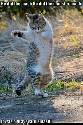Dancing Cat Getting Ready for Tonight