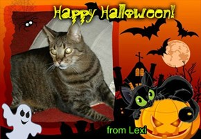 from Lexi