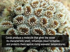 Coral Is Strange