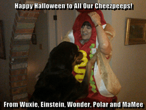 Happy Halloween to All Our Cheezpeeps!   From Wuxie, Einstein, Wonder, Polar and MaMee