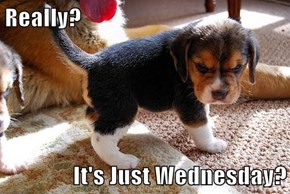 Really?  It's Just Wednesday?