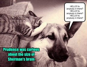Prudence was curious about the size of Sherman's brain