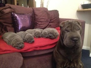 One Big Wrinkle Makes Many Little Wrinkles