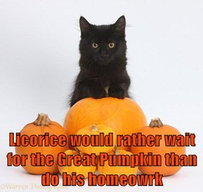 Licorice would rather wait for the Great Pumpkin than do his homeowrk