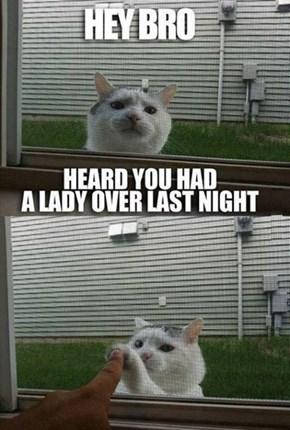 Bro-Cat