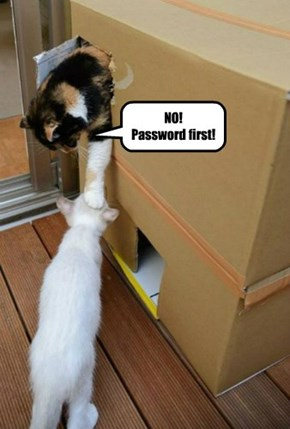 NO! Password first!