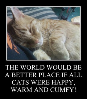 THE WORLD WOULD BE A BETTER PLACE IF ALL CATS WERE HAPPY, WARM AND CUMFY!