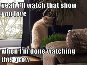 yeah i'll watch that show you love  when I'm done watching this grow