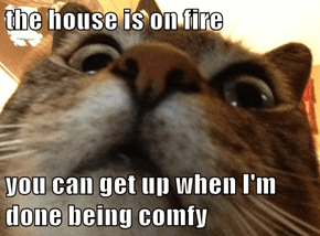 the house is on fire  you can get up when I'm done being comfy