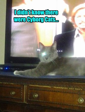 I didn't know there were Cyborg Cats...