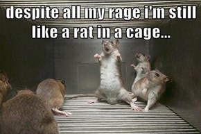 despite all my rage i'm still like a rat in a cage...