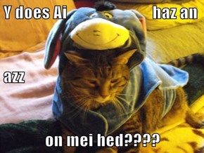 Y does Ai                          haz an azz on mei hed????