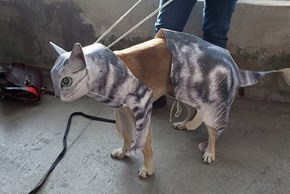 This Dog's Halloween Costume is Acutely Self-Aware