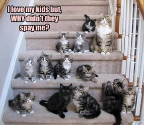 I love my kids but, WHY didn't they spay me?