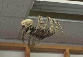 A Spider's Skeleton