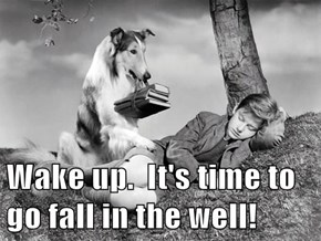 Lassie is Sick of Being the Only Smart One...