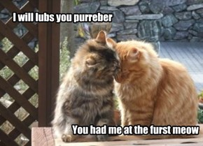 Tom and Ginger, A Purry Romantical  Lub Storeh