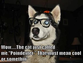 "Wow.....The cat just called me,""Poindexter."" That must mean cool or somethin'"