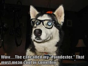 "Wow.....The cat called my,""Poindexter."" That must mean cool or somethin'"