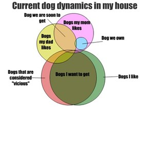 Current dog dynamics in my house