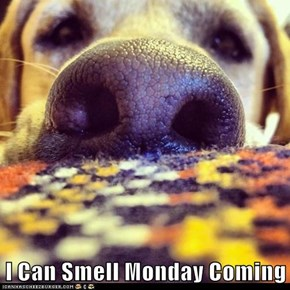I Can Smell Monday Coming
