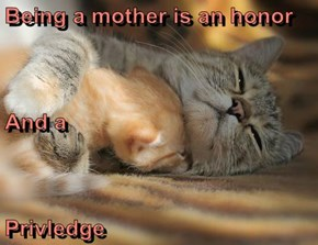 Being a mother is an honor And a Privledge