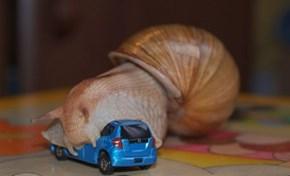 Giant Snail Ravages Car
