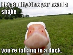 Hey Buddy,Give yer head a shake  you're talking to a duck.