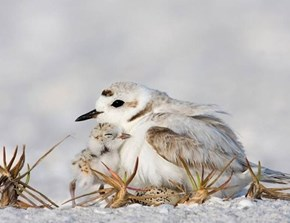 Cuddling Winter Fowl