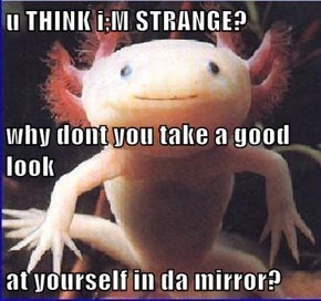 u THINK i;M STRANGE? why dont you take a good look at yourself in da mirror?