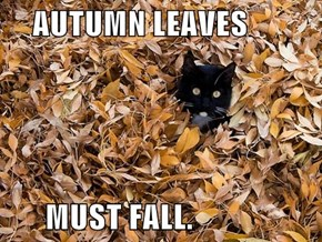 AUTUMN LEAVES        MUST FALL.