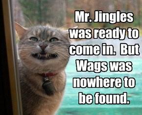 Mr. Jingles was ready to come in.  But Wags was nowhere to be found.