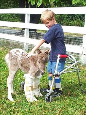 Miniature Horse and Boy Become Best Friends