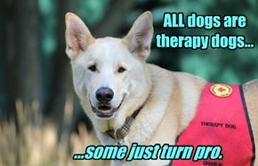 ALL dogs are therapy dogs...