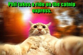 Phil takes a ride on the catnip express.