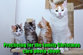 Practicing for the family Christmas card photo shoot.