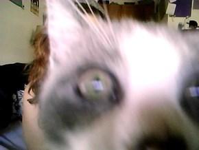 Selfie + Cat = Cat Photo